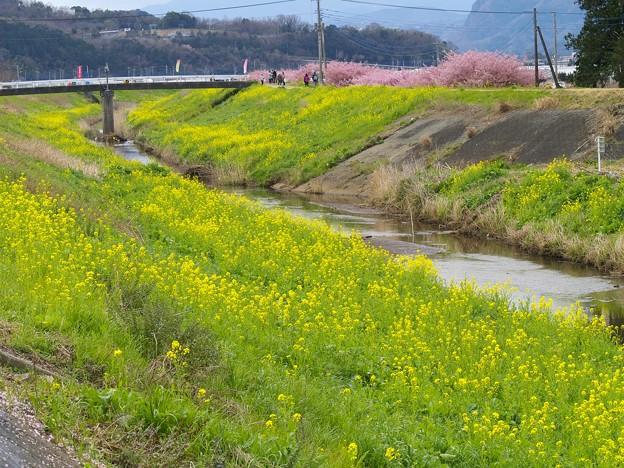 堤防は春の色