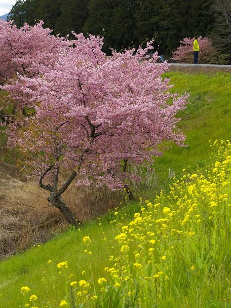春を見回す
