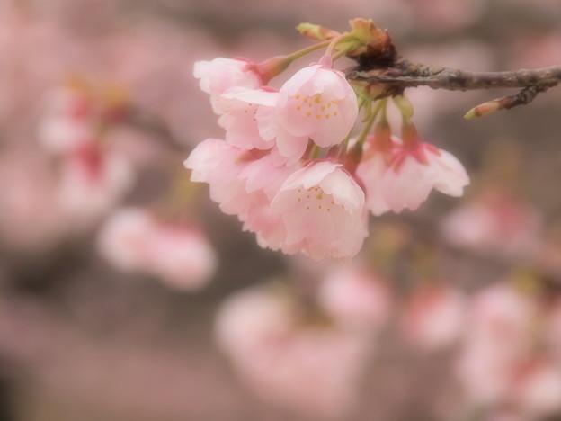 ふわり春の色