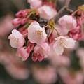 春の香りふんわりと