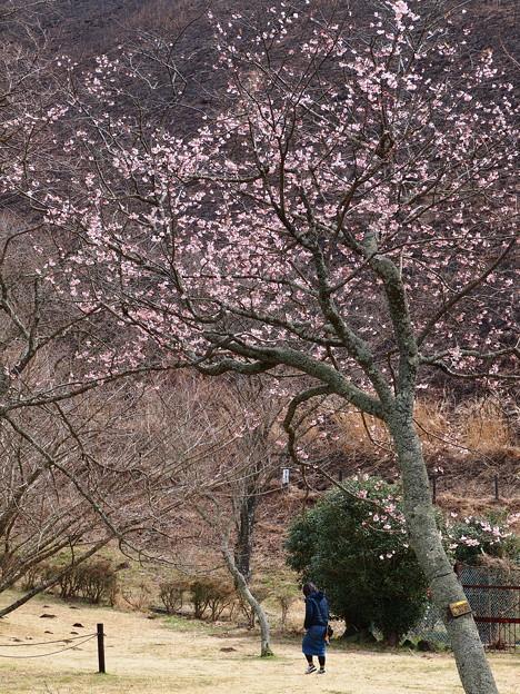 さくら咲く里の春