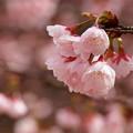 春を染める