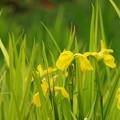 せせらぎに咲く春色