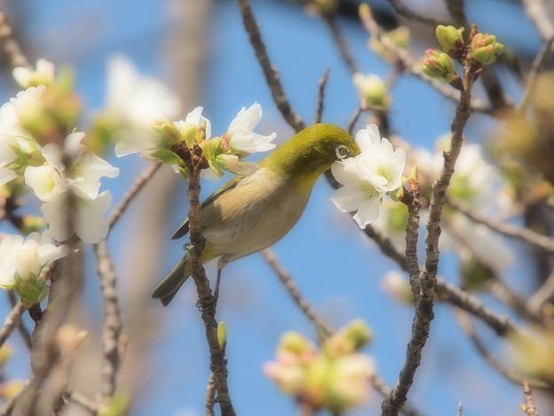 春のご馳走♪