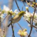 Photos: 春のご馳走♪