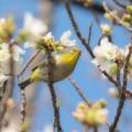 Photos: 春の青空を仰ぐ…