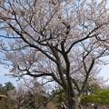 Photos: 春を感じて、パシャ~