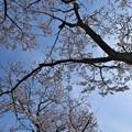 Photos: 春の青空