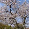 伊豆の地に訪れた春