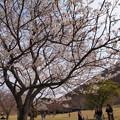 Photos: 春色をチェックする