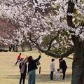 Photos: 春をふたり占め