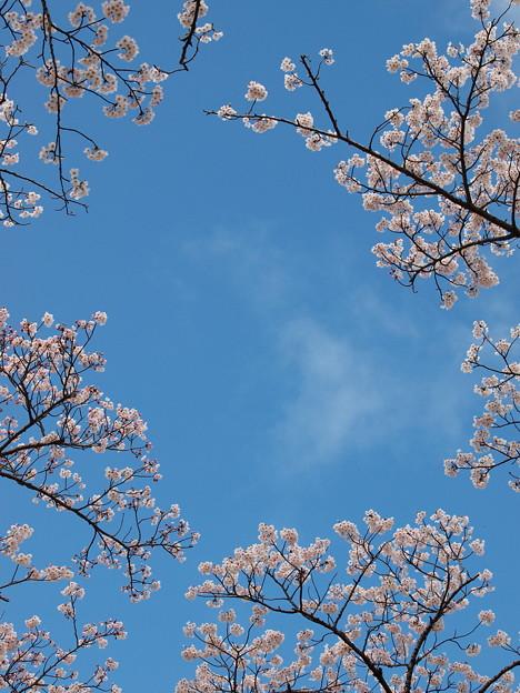 春の青空~うっすら雲と
