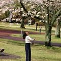 Photos: 春色を見上げる