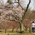 Photos: 負けないで…COVID-19~春、真っ只中