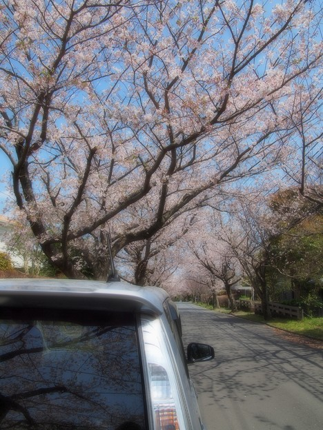 Stay at home ~ COVID-19 type-v ~ お家へ帰ろう