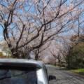 Photos: Stay at home ~ COVID-19 type-v ~ お家へ帰ろう