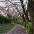 Photos: 新たな日常 ~ COVID-19 type-f