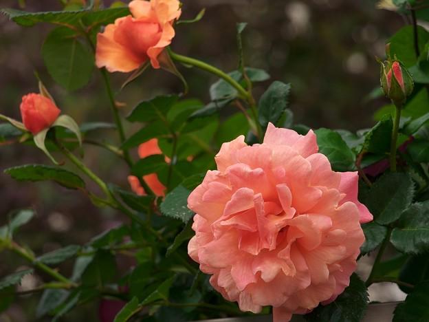 Photos: ビタミン色に咲く