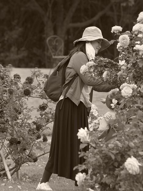 春薔薇の香りを愛でる人
