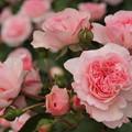 Photos: PINK! Pink!! pink~♪