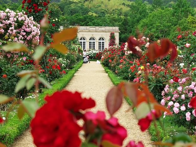 薔薇の花園で激写