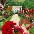 薔薇の花園で激写!?