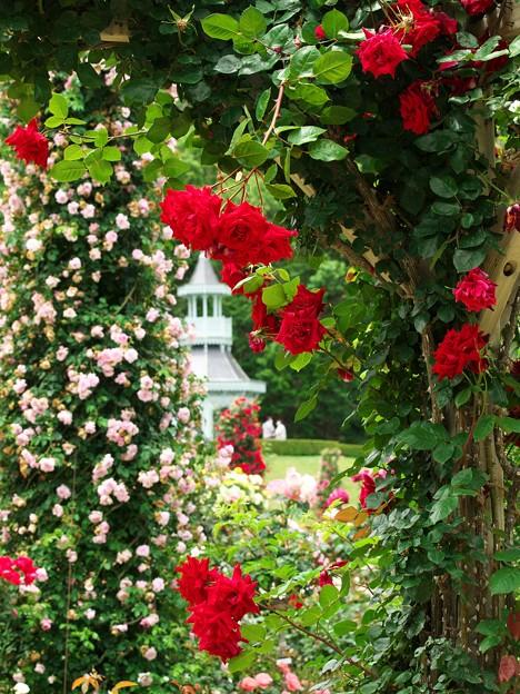 春薔薇に覆われた皇居のキオスク