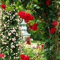 Photos: 春薔薇に覆われた皇居のキオスク
