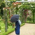 Photos: 日傘も必須