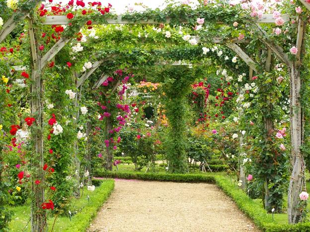 春薔薇に覆われた小径