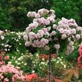 ガーデンの彩り