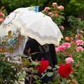 ガーデンに舞うパラソル