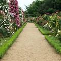 春薔薇ロード