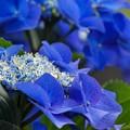 Photos: The Blue