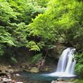 新緑に覆われた初景滝
