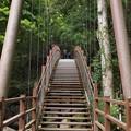 Photos: 吊橋は此処から…