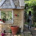 Photos: バラ咲く小径
