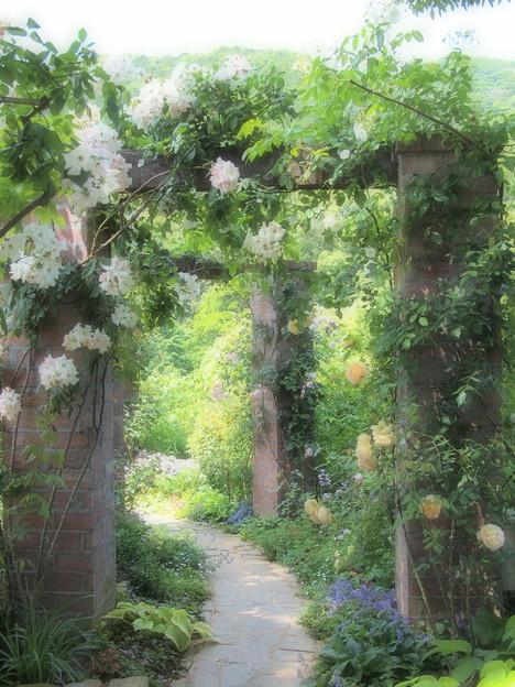 春薔薇咲く小径
