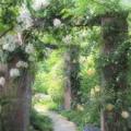 Photos: 春薔薇咲く小径