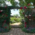 Photos: 初夏の園へ誘う