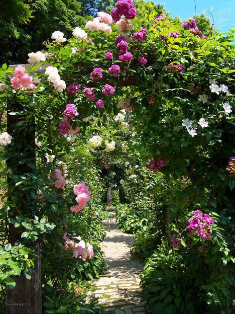 初夏の薔薇に囲まれし小径は…