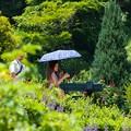 ガーデンに咲くパラソル
