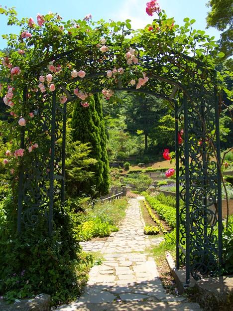 薔薇咲くアーチの向こう側