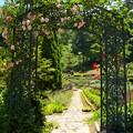 Photos: 薔薇咲くアーチの向こう側