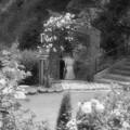 Photos: ようこそ薔薇の園へ♪