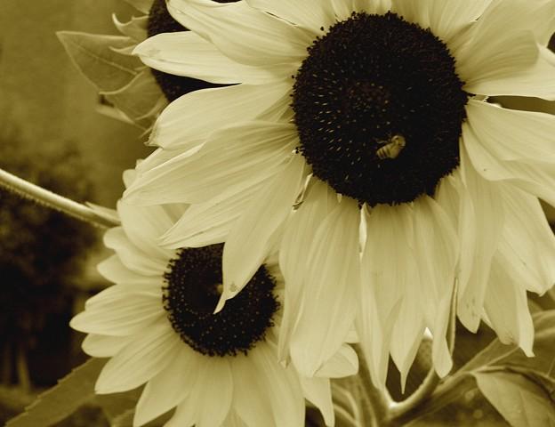あの夏の日、向日葵の唄が聞こえる…