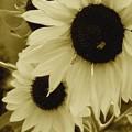 Photos: あの夏の日、向日葵の唄が聞こえる…
