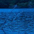Photos: 蒼き湖畔