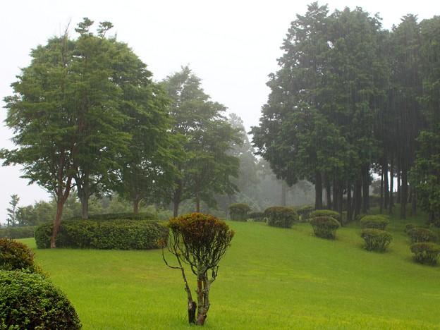 雨の山中城址