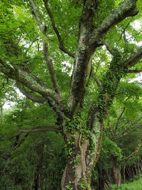 梅雨に濡れた樹木